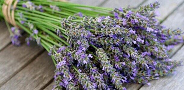 Lavendel in je eigen huis, tuin en keuken